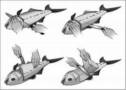 Fillet your fish - step 1 - FishingInfo.co.za